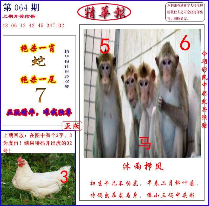 064期新精华报报